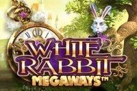 btg white rabbit